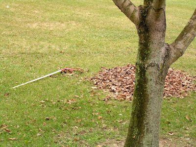 Raking Leaves and Injuries