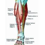 Get a Leg Up on Shin Splints