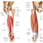 Avoid a Hamstring Leg-acy